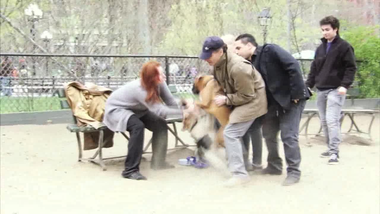 2012 Webby Winner - Dog Park