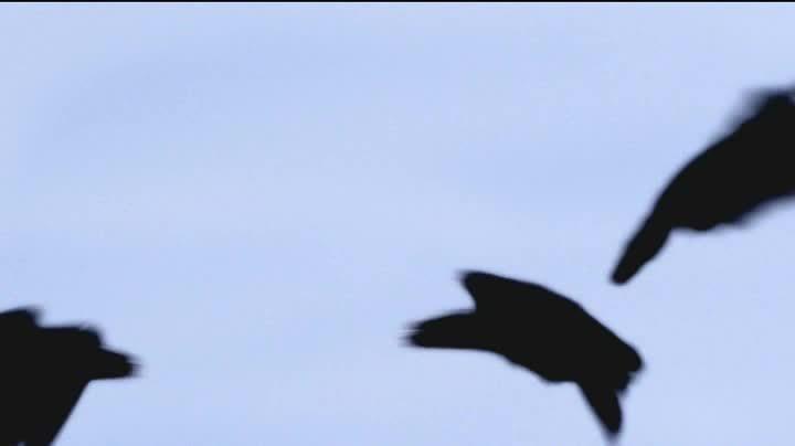 Webby Award Nominee - G4 Films Epictober Film Festival – THE BIRDS OF ANGER