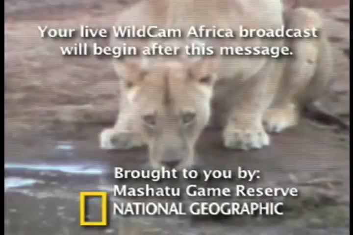 People's Voice - WildCam Africa