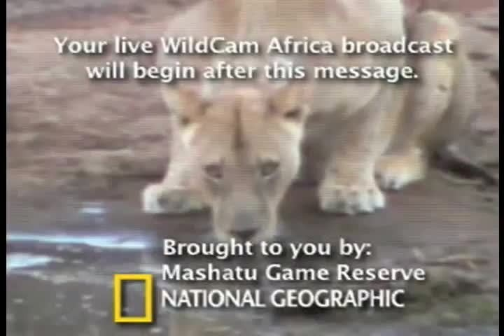 2008 Webby Winner - WildCam Africa