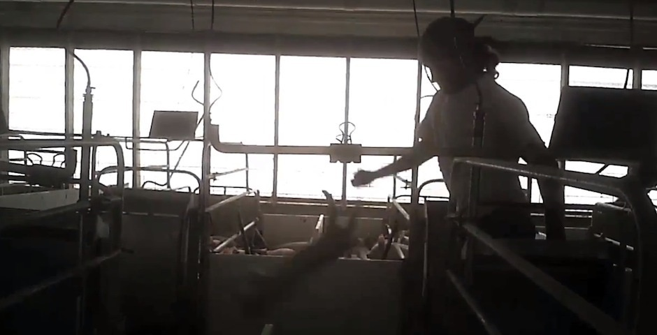 2013 Webby Winner - Shocking Animal Cruelty at Tyson Foods Supplier