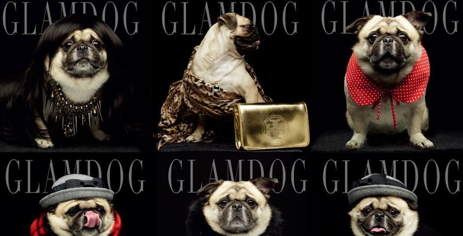 2014 Webby Winner - GLAMDOG