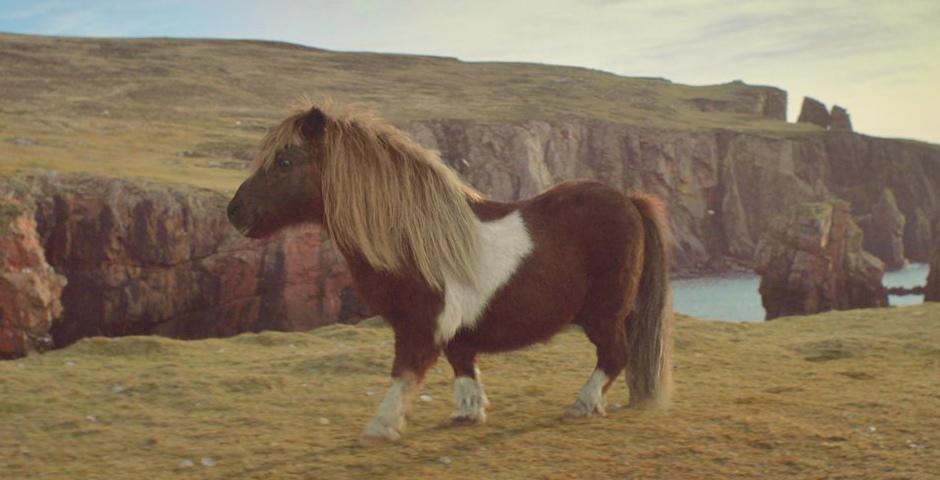 Nominee - Three 'The Pony'