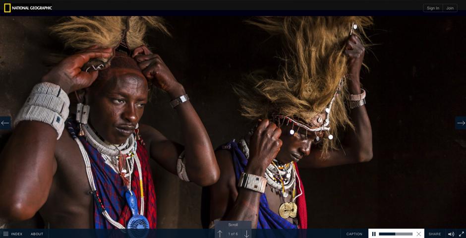 Webby Award Winner - The Serengeti Lion