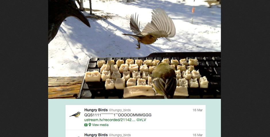 People's Voice - Birds On Twitter