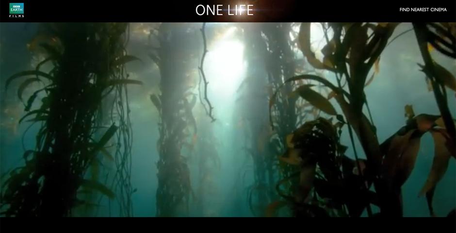 Nominee - BBC Life Is
