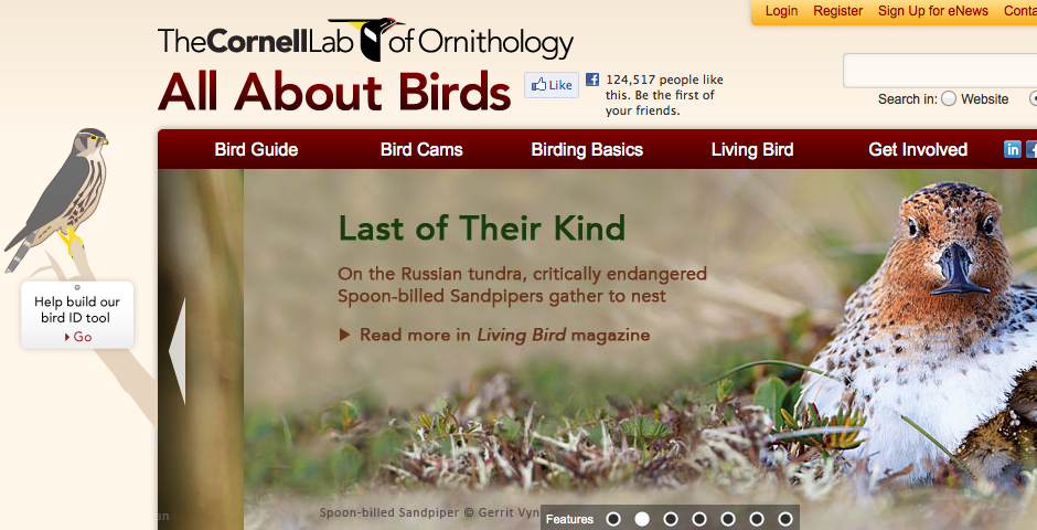 Webby Award Winner - All About Birds