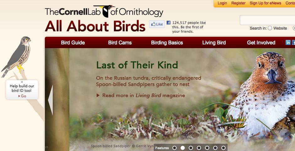 2010 Webby Winner - All About Birds